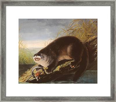 Entrapped Beaver Framed Print by MotionAge Designs