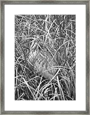 Entrapped Framed Print by I'ina Van Lawick