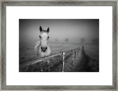 Equine Fog Framed Print by Taken with passion