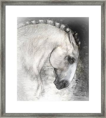 Equus Framed Print by Shanina Conway