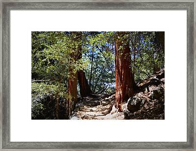 Ernie Maxwell Scenic Trail - Idyllwild Framed Print by Glenn McCarthy