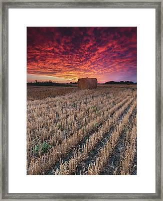 Essex Hay At Sunrise Framed Print by Cale Best