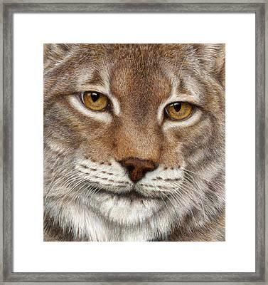 Eurasian Lynx Framed Print by Pat Erickson