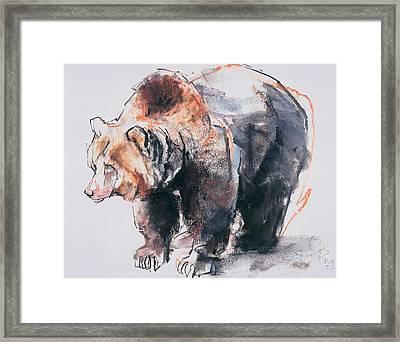 European Brown Bear Framed Print by Mark Adlington