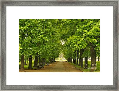 European City Park With Benches In Spring Time Framed Print by Unknow