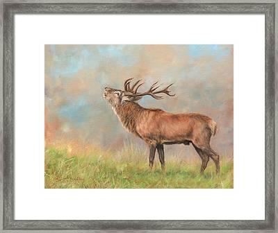 European Red Deer Framed Print by David Stribbling