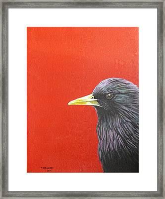 European Starling Framed Print by Theodora Sacknoff