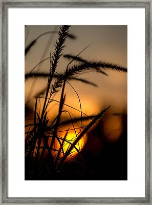 Evening Arrives Framed Print by Andrea Kappler