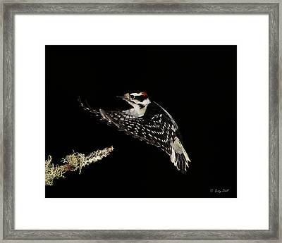 Evening Cruise Framed Print by Gerry Sibell
