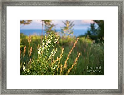 Evening Meadow Framed Print by Elena Elisseeva