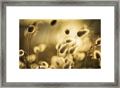 Evening Framed Print by Nailia Schwarz