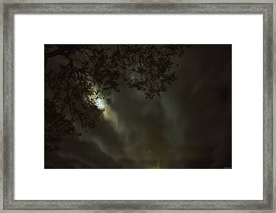 Evening Stroll  Framed Print by Soli Deo Gloria Wilderness And Wildlife Photography