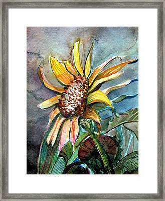 Evening Sun Flower Framed Print by Mindy Newman