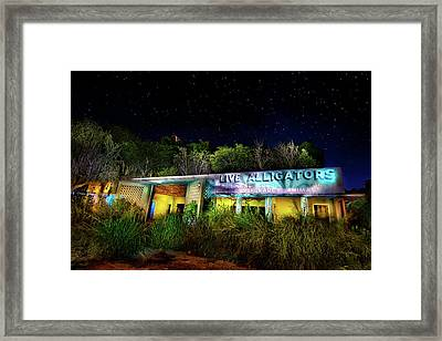 Everglades Gatorland Framed Print by Mark Andrew Thomas