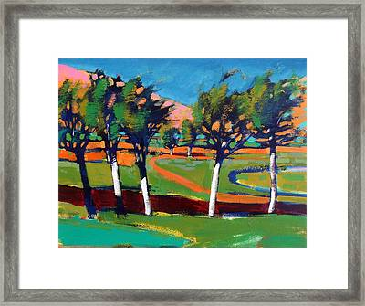Evergreen Framed Print by Paul Powis
