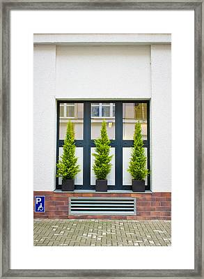 Evergreen Shrubs Framed Print by Tom Gowanlock