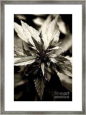 Evermore Framed Print by Linda Knorr Shafer
