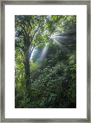 Evolution Framed Print by Jeremy Jensen