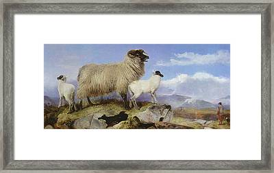 Ewe And Lambs Framed Print by Richard Ansdell
