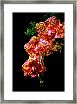 Exotic Cascade Of Orchids Framed Print by Julie Palencia