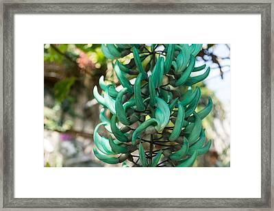Exotic Jade Vine Framed Print by Georgia Mizuleva