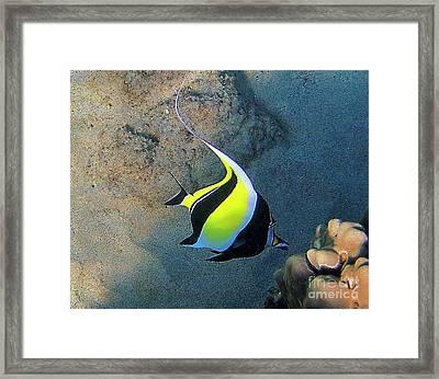 Exotic Reef Fish  Framed Print by Bette Phelan