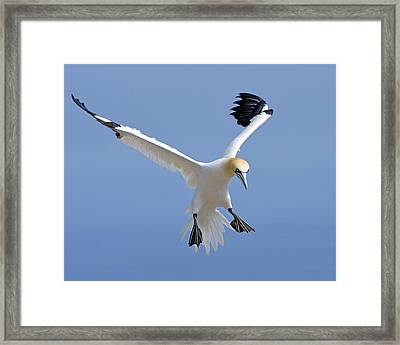 Expanding Surface Framed Print by Tony Beck