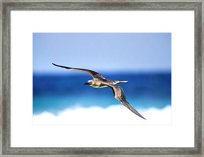 Eye Contact Framed Print by Sean Davey