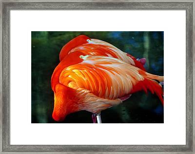 Eye Of The Flamingos Framed Print by David Lee Thompson