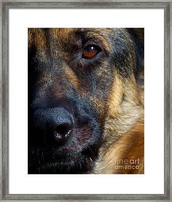 Eye Of The Shepherd Framed Print by Jai Johnson