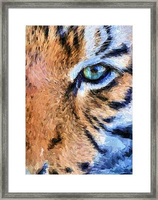 Eye Of The Tiger Framed Print by JC Findley