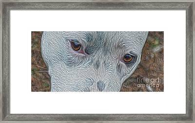 Eyes Of Concern Framed Print by Kim Pate