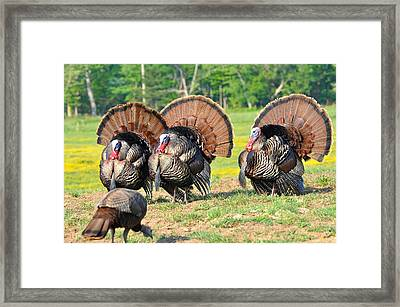 Eyes On The Prize Framed Print by Todd Hostetter