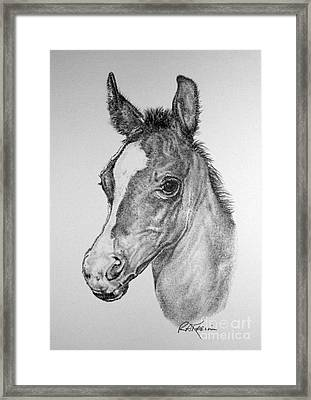Face Of A Foal Framed Print by Roy Anthony Kaelin