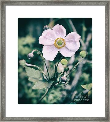 Face Framed Print by SK Pfphotography