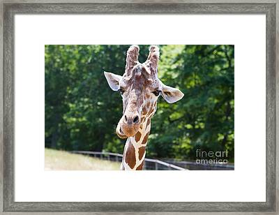 Face To Face  Framed Print by A New Focus Photography