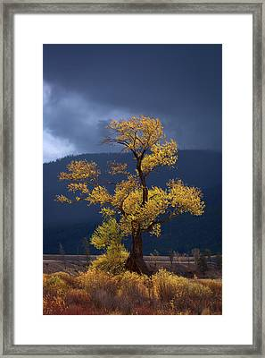 Facing The Storm Framed Print by Edgars Erglis