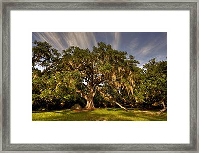 Fairchild Oak Framed Print by Andrew Armstrong  -  Mad Lab Images