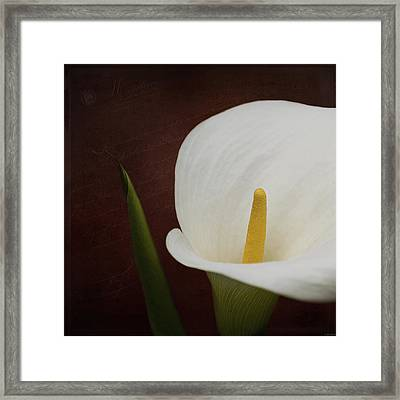 Faith - Flower Art Framed Print by Jordan Blackstone