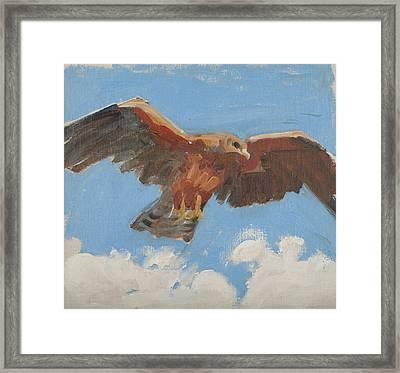 Falcon Framed Print by Akseli Gallen-Kallela