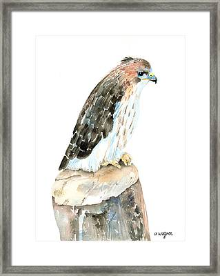 Falcon Framed Print by Arline Wagner