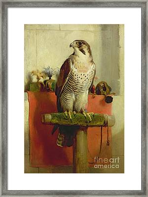 Falcon Framed Print by Sir Edwin Landseer