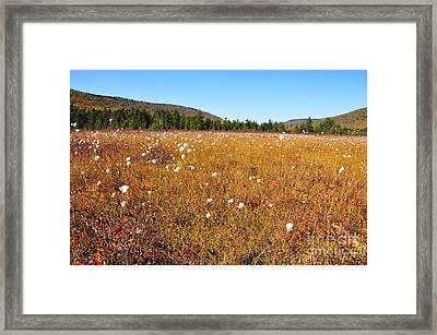 Fall Color Cranberry Glades Framed Print by Thomas R Fletcher
