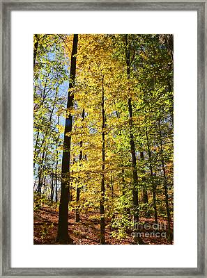 Fall Color Cuyahoga Valley National Park 2259 Framed Print by Jack Schultz
