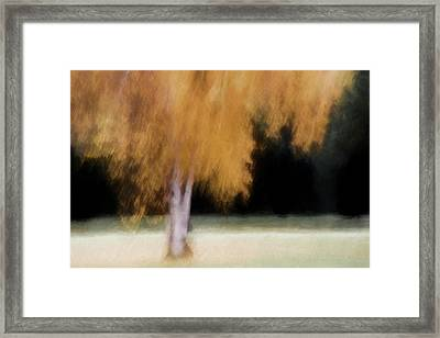 Fall Color With Painterly Effect Framed Print by Carol Leigh