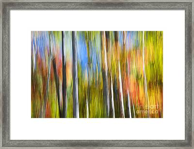 Fall Colors Abstract Framed Print by Elena Elisseeva