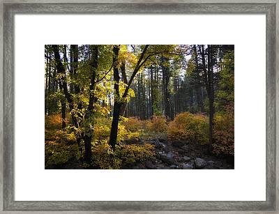 The Magical Fall Colors  Framed Print by Saija  Lehtonen