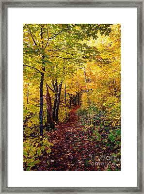 Fall Colors Oberg Mountain North Shore Minnesota Framed Print by Wayne Moran