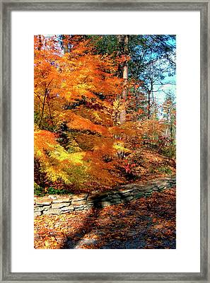 Fall Feathers Framed Print by Larry Bishop