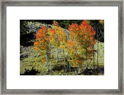 Fall In Colorado Framed Print by Marty Koch